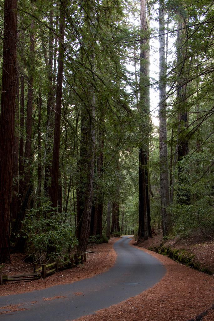 12.10. Big Basin: Sequoia Trail