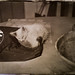 Cats, ambrotype 4x5
