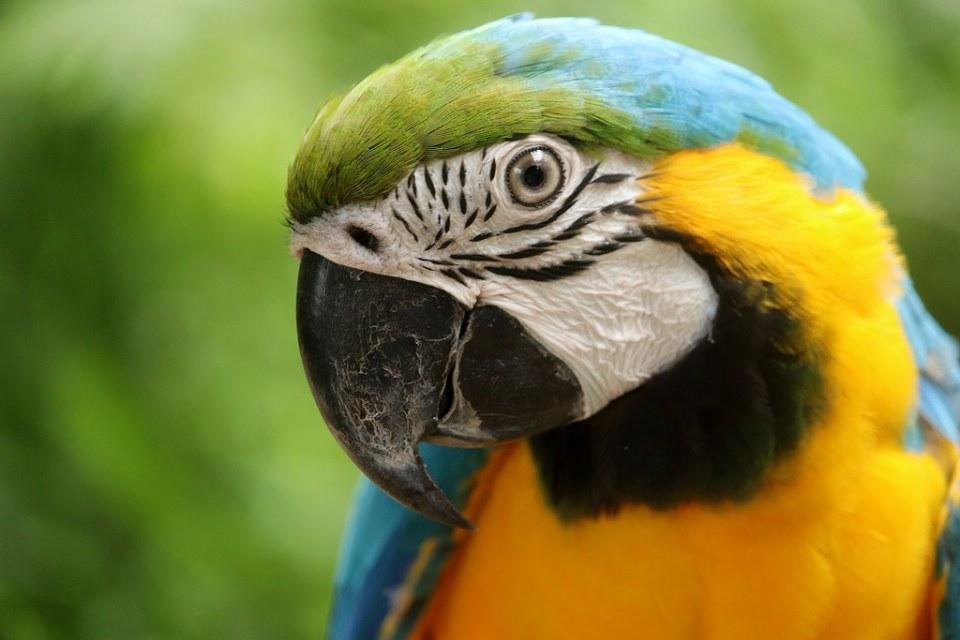 Blue-and-Yellow Macaw - Cebu Safari & Adventure Park