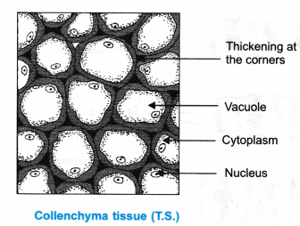 ncert-class-9-science-lab-manual-plant-and-animal-tissues-4