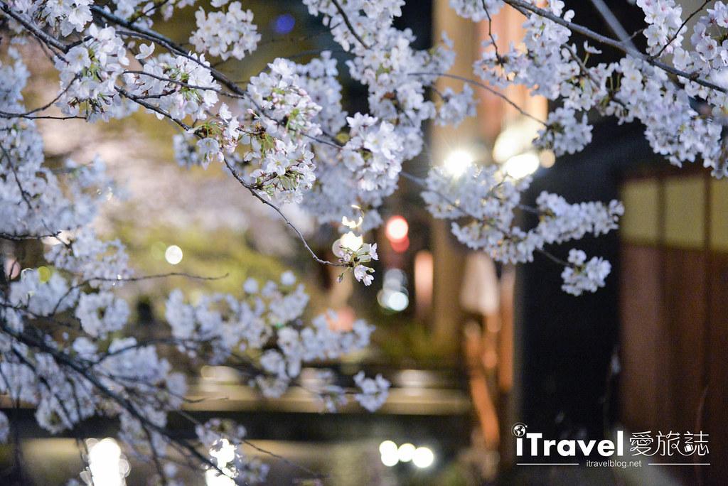 京都赏樱景点 祇园白川 (20)
