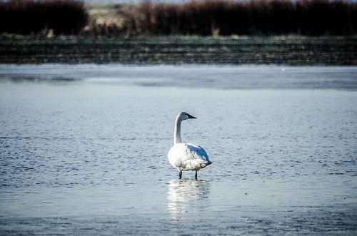 Skagit Morning Birds-30