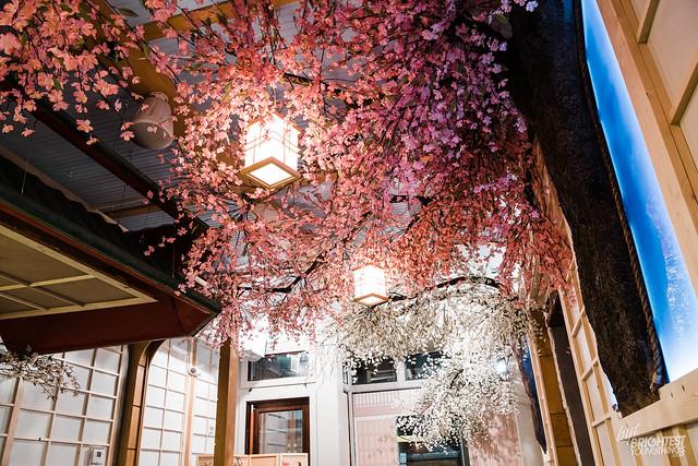 Cherry Blossom PUB-24