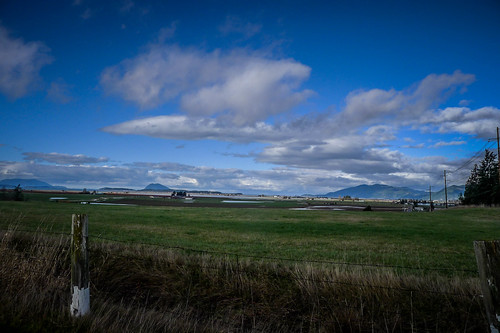 Skagit Fields-004