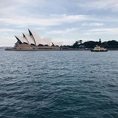 #evening #light on the #iconic @sydneyoperahouse @sydney @visitnsw @australia #ilovesydney #sydney #summer #newsouthwales #wanderlust #travel #australia #seeaustralia #sydneyfolk #australiagram #sydneytravel #travel #guardiantravelsnaps #guardiancities #l