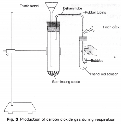 cbse-class-10-science-lab-manual-co2-released-respiration-6