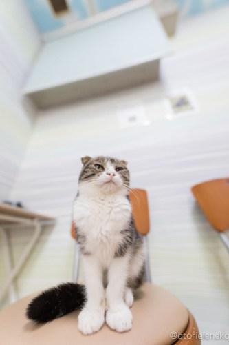 アトリエイエネコ Cat Photographer 40356489681_d21c00d3df 1日1猫!猫カフェきぶん屋さんに行ってきました♪(2/3) 1日1猫!  里親様募集中 猫写真 猫カフェ 猫 子猫 大阪 兵庫 保護猫カフェ 保護猫 カメラ きぶん屋 Kitten Cute cat