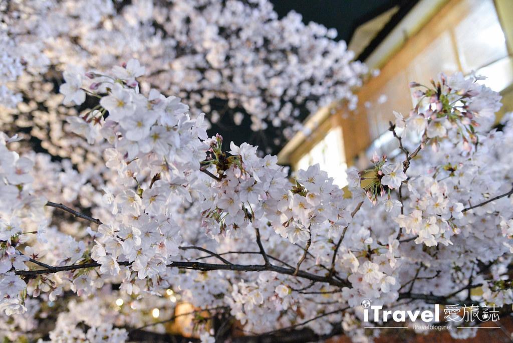 京都赏樱景点 祇园白川 (17)