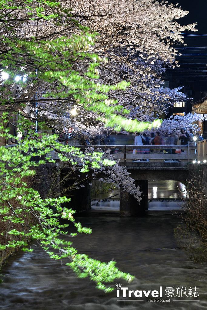 京都赏樱景点 祇园白川 (3)