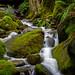 Rainforest Creek, British Columbia