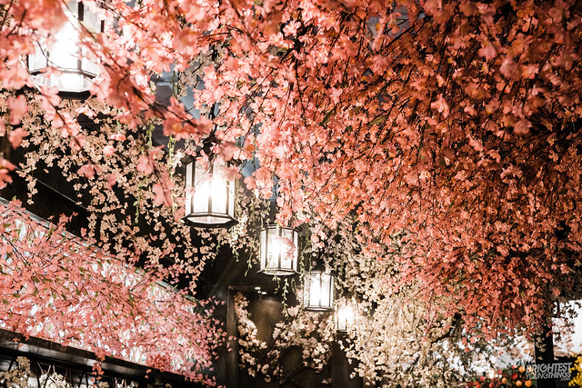 Cherry Blossom PUB-10