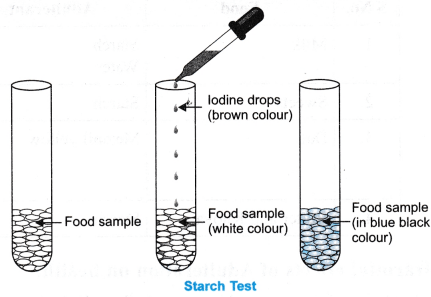 ncert-class-9-science-lab-manual-food-sample-test-for-starch-and-adulteration-3
