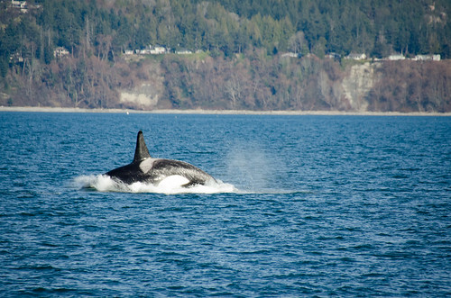 Whale Watching with Island Adventures-231