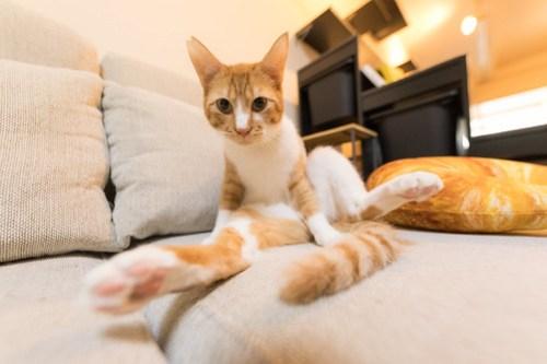 アトリエイエネコ Cat Photographer 40077253845_9be4f7b638 1日1猫!保護猫カフェみーちゃ・みーちょ その2 1日1猫!  里親様募集中 猫写真 猫 子猫 大阪 保護猫カフェ 保護猫 スマホ カメラ みーちゃ・みーちょ Kitten Cute cat