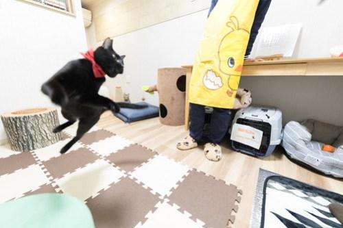 アトリエイエネコ Cat Photographer 40133277274_acbaf326ab 1日1猫! 3/10オープン!保護猫カフェけやきさんへ行く(2/3) 1日1猫!  高槻ねこのおうち 里親様募集中 猫写真 猫 子猫 大阪 写真 保護猫カフェけやき 保護猫カフェ 保護猫 スマホ カメラ Kitten Cute cat
