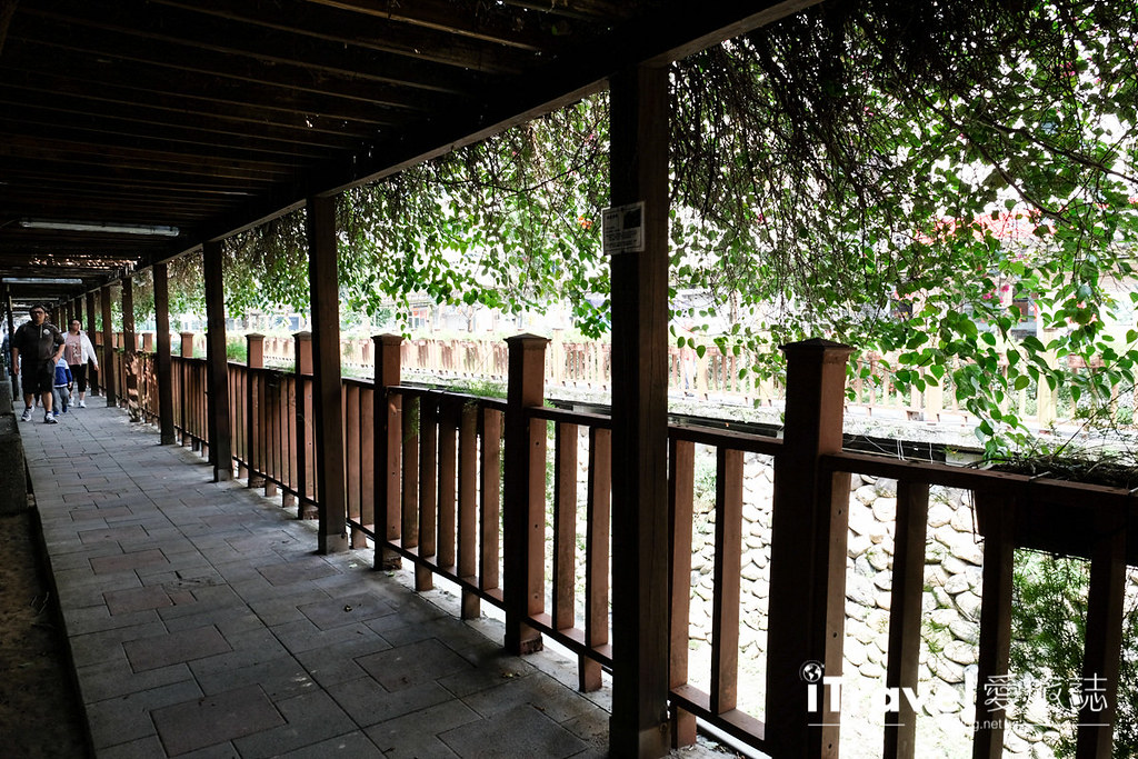 土城赏樱景点 希望之河左岸樱花 (22)