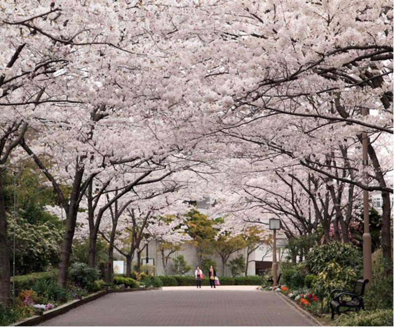 神戸總合運動公園