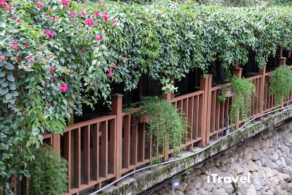 土城赏樱景点 希望之河左岸樱花 (23)