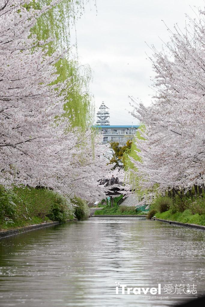 京都赏樱景点 伏见十石舟 (18)