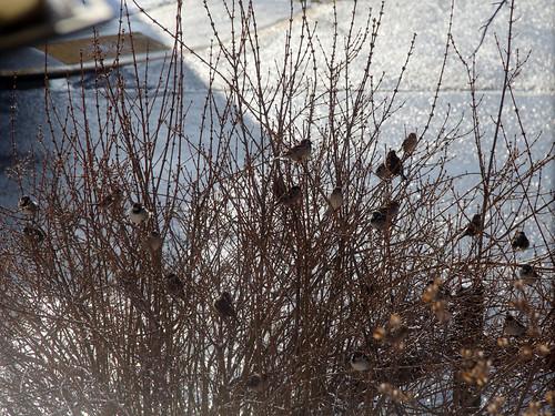2018-03-13_Birds_45
