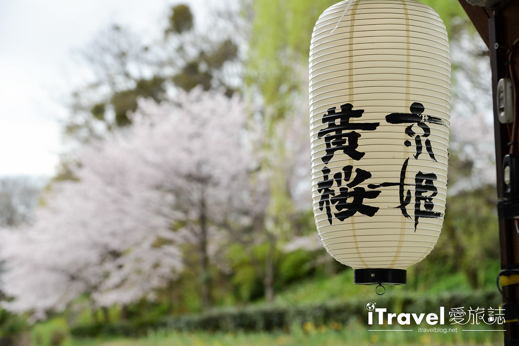 京都赏樱景点 伏见十石舟 (41)