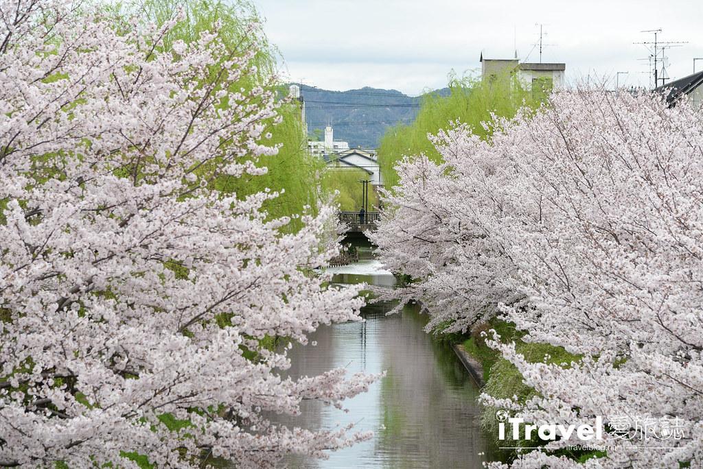 京都赏樱景点 伏见十石舟 (51)