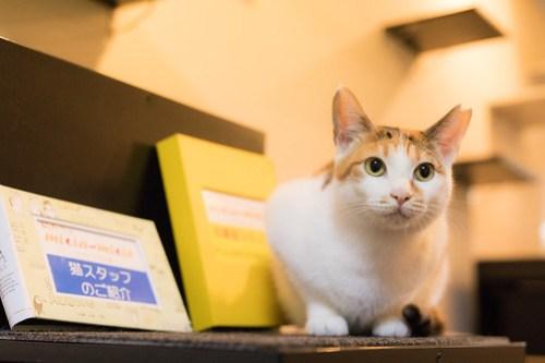 アトリエイエネコ Cat Photographer 40261843474_89d3b7fb5b 1日1猫!保護猫カフェみーちゃ・みーちょ その2 1日1猫!  里親様募集中 猫写真 猫 子猫 大阪 保護猫カフェ 保護猫 スマホ カメラ みーちゃ・みーちょ Kitten Cute cat