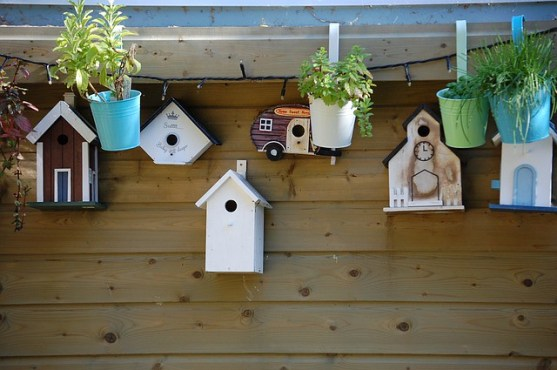 birdhouse weekly favorites 002