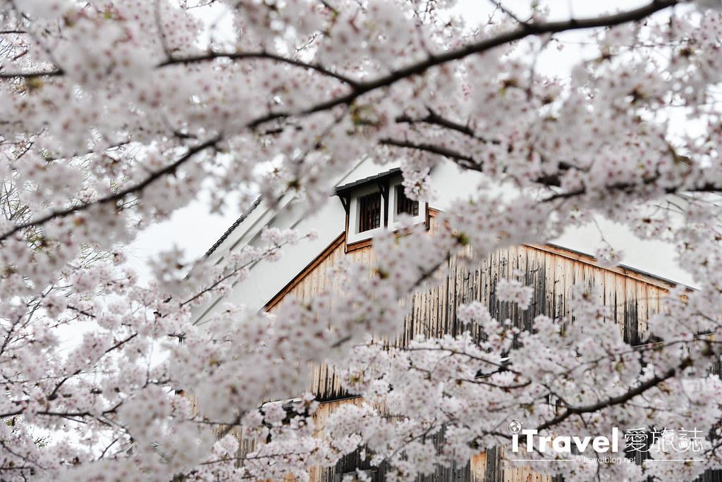 京都赏樱景点 伏见十石舟 (44)