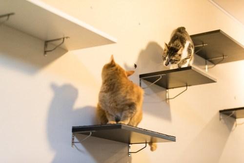 アトリエイエネコ Cat Photographer 26099247217_ac30b6c431 1日1猫!保護猫カフェみーちゃ・みーちょ その3 1日1猫!  里親様募集中 猫写真 猫 子猫 大阪 初心者 写真 保護猫カフェ 保護猫 ハチワレ カメラ みーちゃ・みーちょ Kitten Cute cat
