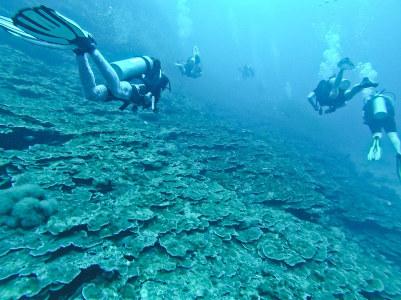 Scuba diving in the tropics is always enjoyable - warm water, gorgeous corals and a mid-boggling array of marine life are huge perks. We had a fantastic experience diving in Koh Lanta with Scubafish!