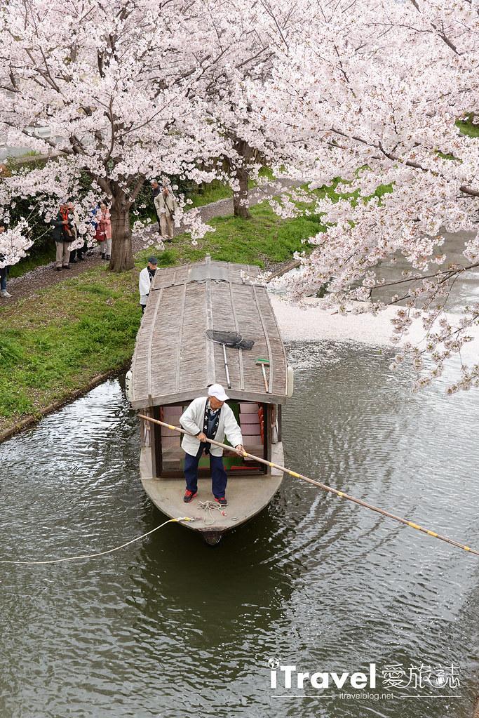 京都赏樱景点 伏见十石舟 (43)