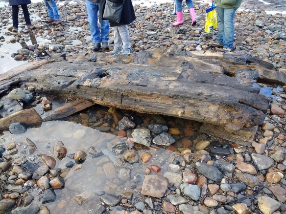 Redcar Petrified Forest Shipwreck