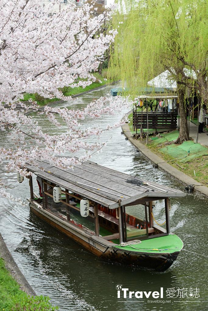 京都賞櫻景點 伏見十石舟 (7)