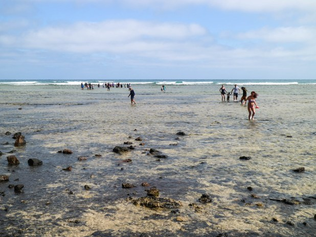 Shark bay en Sal