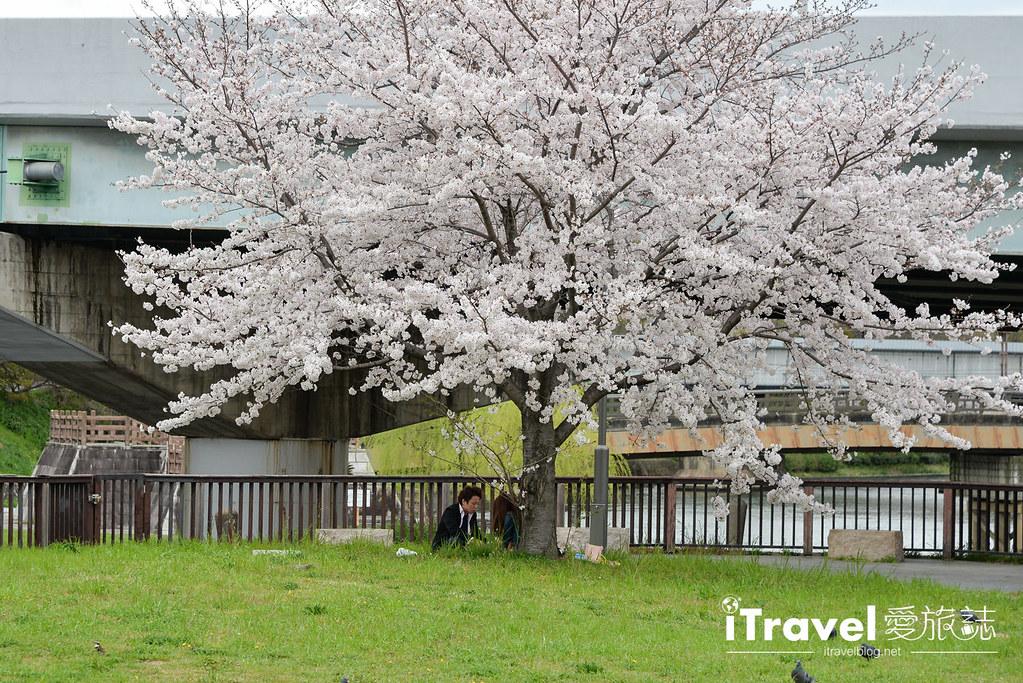 京都赏樱景点 伏见十石舟 (24)