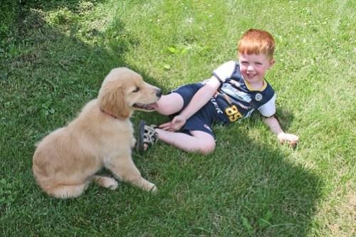 子どもと仲が良く教育に役立っている犬