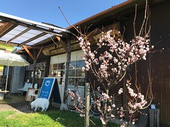 春の海のカフェ高木