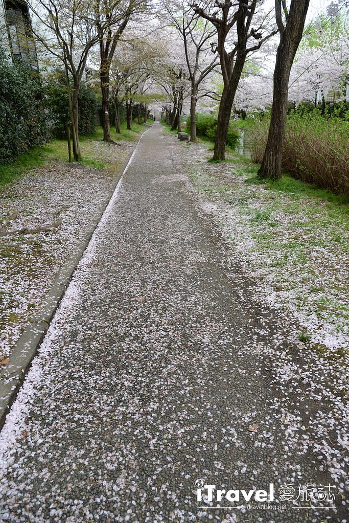 京都赏樱景点 伏见十石舟 (48)