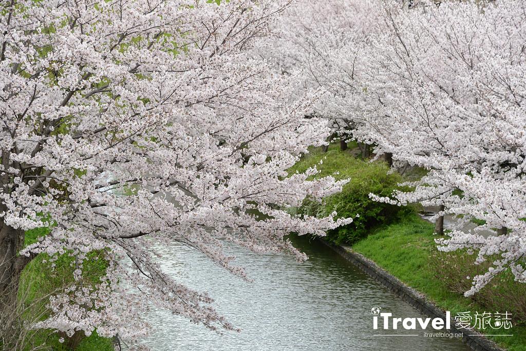 京都赏樱景点 伏见十石舟 (53)