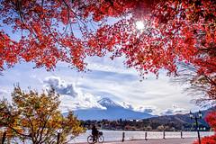 Autumn @ Fuji, Kawaguchiko, Japan