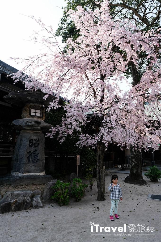 福岡賞櫻景點 櫛田神社 (5)