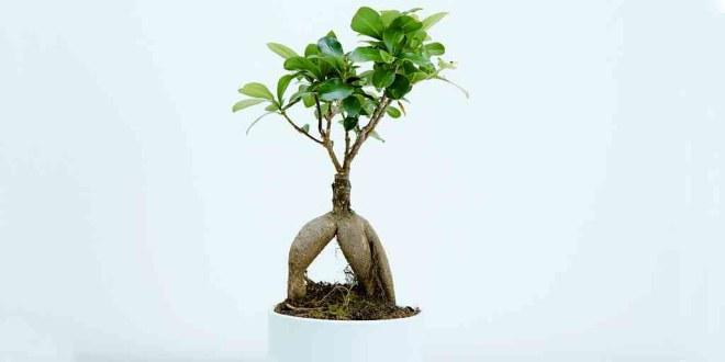 plante-robot-mit-lumière
