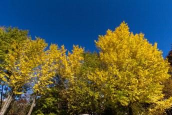 en nog een laatste plaat van de herfstkleuren in Japan