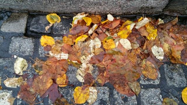 Sur le pavé mouillé, Une pluie de feuilles est tombée.  Automne.