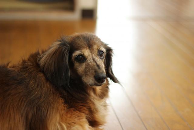 健康診断を半年に1度受けるシニアの犬