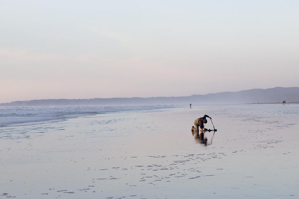 man digging for razor clams