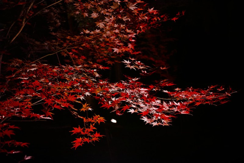 autumn colored leaves Tsukinoishi Momiji Park 12