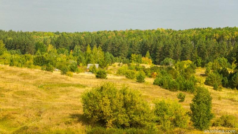 Лес, Пензенская область