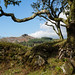Branch over Leather Tor - NK2_6588